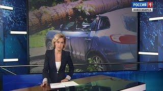 Ветхие деревья падают на автомобили новосибирцев из-за непогоды