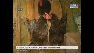 В Чувашии продолжается карантин из-за вспышки птичьего гриппа