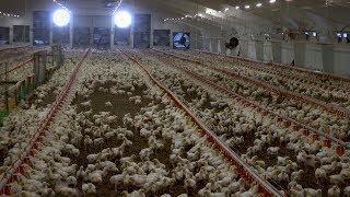 «Край аграрный». Переработка овощей и мяса птицы