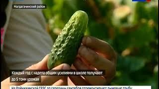 Ученики Ушумунской школы вырастили урожай