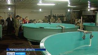 Колымские ученые прогнозируют хороший подход лососёвых летом 2018 года