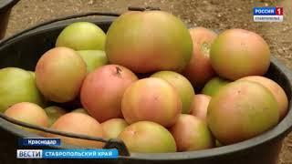 Почему подорожали фрукты и овощи? Плодоовощная аналитика