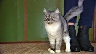 Мурлыкающий котенок из Ханты-Мансийска задумался о хозяине