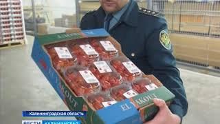 Калининградские таможенники задержали партию томатов сомнительного производства