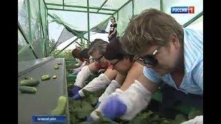 Сбор урожая, лежа в тени: в Багаевском районе используют специальные уборочные платформы