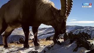 Вынесен обвинительный приговор по делу о нелегальной охоте в Шавлинском заказнике