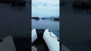 """Жители побережья Приморья в шоке от иностранного """"нашествия"""""""