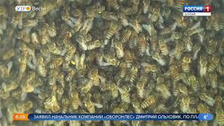 В Алтайском крае будут собирать мёд для военных