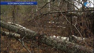 В этом году осенние ветра поломали почти 40 гектаров леса
