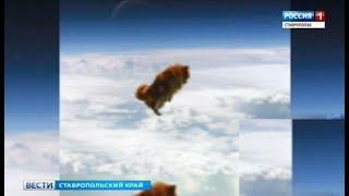 Вести в сети #268. Падающие с неба собаки и укрощение ползучих