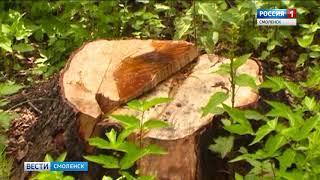 Смоленский суд рассмотрит дело лесорубов