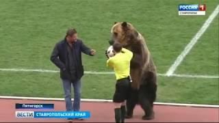 Медведь Тима отдал первый пас в Пятигорске