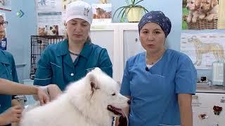 Советы ветеринара: как ухаживать за шерстью домашних животных? Студия 11. 26.09.18.