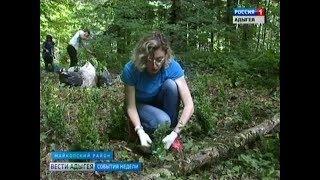 ГТРК «Адыгея» получила сертификат на посадку самшита