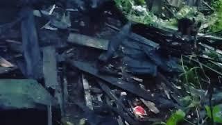 В Нижнем Новгороде пожарные спасли слепых щенков из горящего дома