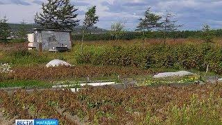 Делят землю, на которую прав не имеют, скандал в огородном товариществе