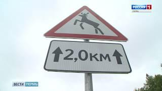 В Прикамье устанавливают дополнительные знаки «Дикие животные»