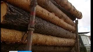 В Красноярском крае предприниматель подозревается в контрабанде лесоматериалов