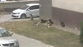 Жителей Минвод пугают стаи бродячих собак во дворах
