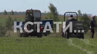 Нижегородские яблоки готовятся вытеснить с прилавков импортные