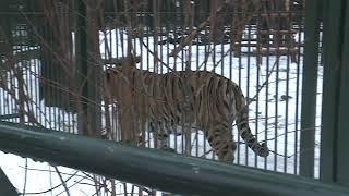 В Великоустюгском зоопарке пополнение