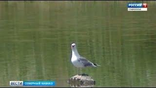 Экологический беспредел. Уникальное озеро в Дагестане может исчезнуть