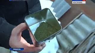 В Нерехте задержали двоих молодых людей, торговавших марихуаной