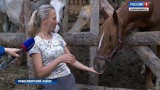 Новосибирские энтузиасты спасают от гибели израненных лошадей