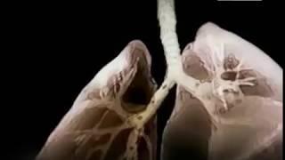 Проблемы и причины онкологических заболеваний