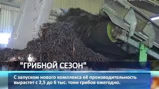 В Самарской области откроют крупнейшее предприятие по выращиванию шампиньонов