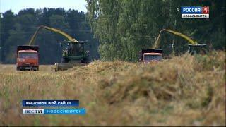 Аграрии Маслянино стали первыми по урожайности в Новосибирской области