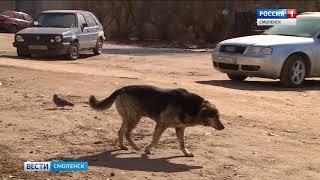 Бездомные смоленские собаки примерят «серьги»