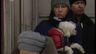 Защита от бешенства. В Челябинске владельцы кошек и собак могут бесплатно привить питомцев