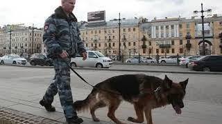 В Петербурге эвакуировали около 150 человек из ТЦ