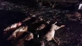 Троих браконьеров из Волгограда поймали с добычей