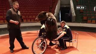Репетиция Медвежьего цирка в Нижнем Новгороде