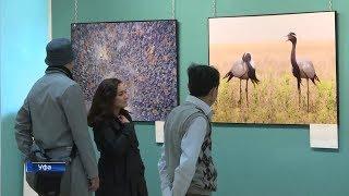 В Уфе открылась выставка «Заповедная Башкирия»
