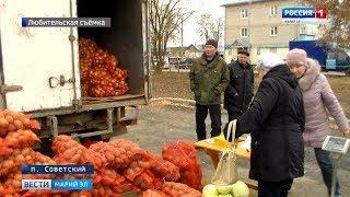Сельскохозяйственная ярмарка впервые прошла в поселке Советском