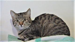 Бездомная кошка в Ханты-Мансийске ищет свой дом
