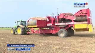 Волгоградские овощеводы высаживают рассаду в открытый грунт