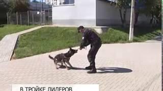 Полицейский-кинолог Роман Чупрынин вошёл в тройку лучших в ЦФО