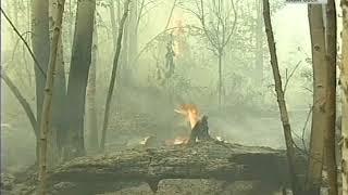 Лесные пожары 4 июня