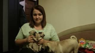 На востоке Москвы сотрудники полиции задержали подозреваемого в хищении щенка
