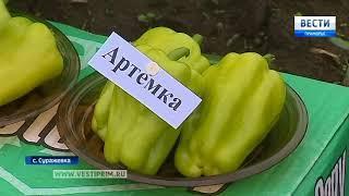 Московские ученые на «пятёрку» оценили усилия приморских селекционеров