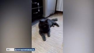 В Вологде спасли кота, застрявшего в вентиляционной шахте