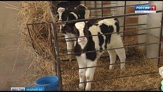 Первые сельхозпроизводители Марий Эл получили субсидии на развитие животноводства