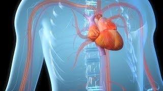 Здоровый интерес 22 мая 2018 Сердце+Суставы