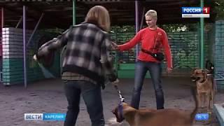 Петрозаводский общественный приют для бездомных животных получил  президентский грант