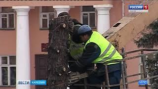 На площади Ленина  срубили четыре ели