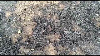 Пшеничные поля горят на Ставрополье